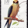 Polish stamp depicting falco vespertinus — Stock Photo #39559271