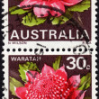 Postage stamps showing AustraliWaratah plant — Stock Photo #39559435