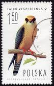 польский штамп с изображением falco vespertinus — Стоковое фото