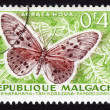Butterfly depicted on postage stamp — Stock Photo