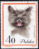 Polish postage stamp showing a European cat — Stock Photo