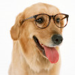Lovely dog — Stock Photo
