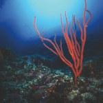 Underwater panorama — Stock Photo #24489079