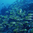 Underwater panorama — Stock Photo #24496931