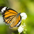 Closeup of a butterfly — Stockfoto