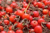 Dry berries of dogrose — Stock Photo