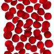 Red rose petals isolated on white background — Stock Photo #19224013