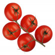Tomatoes on a branch isolated on white background — Stock Photo