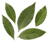 Bay leaves isolated on white background — Stock Photo