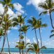 Luxury resort beach in Punta Cana, Dominican Republic — Stock Photo #45583269