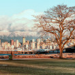 Bare Tree With Vancouver Skyline - Stock Photo