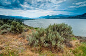 Okanagan Lake Near Naramata View With Brush — Stock Photo