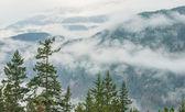 Bomen voor bewolkt berglandschap — Stockfoto