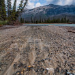 Kootenay Park View with Sand and Mountain — Stock Photo