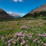 Purple Mountain Flowers — Stock Photo