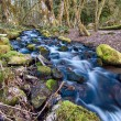 Stock Photo: Flowing Stream With Mossy Rocks