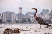 Heron In front of City Skyline — Foto de Stock