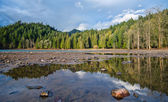 Forest along shore of lake — Stock Photo