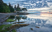 Coast at Sunrise with Trees Reflected — Foto de Stock