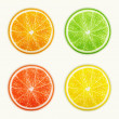 Set of citrus fruits. Orange, Lime, Grapefruit, Lemon. — Stock Vector #28025607
