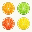 Set of citrus fruits. Orange, Lime, Grapefruit, Lemon. — Stock Vector