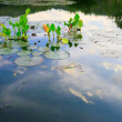 Tulips and reflection of the sky on a pond — Stock Photo #19703359