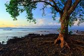Harmonic colors of nature at Borneo, Sabah, Malaysia — Stock Photo