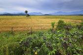 Rural scene deep inside Borneo, Sabah, Malaysia — Stock Photo