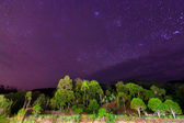 Starry sky above tropical trees at Sabah, Borneo, Malaysia — Stock Photo