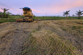 Combine harvester and harvested paddy at Borneo, Sabah, Malaysia — Stock Photo