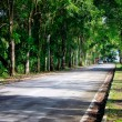 Road through tunnel of trees — Stock Photo