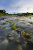 River with mossy rocks at Sabah, Borneo, Malaysia — Stock Photo