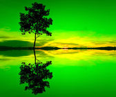 Reflection and silhouette of a single tree — Stock Photo