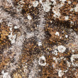 Stock Photo: Mossy rock texture
