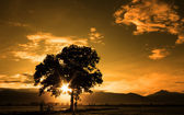 Fine art silhouette of single tree with sunburst — Stock Photo