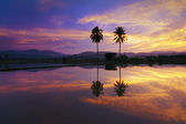 Reflection of dramatic sunset colors at a rural area in Sabah, Borneo, Malaysia — Stock Photo