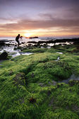 Mossy rocks at sunset in Sabah, Malaysia, Borneo — Stockfoto