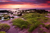 Rocks with green moss on a gloomy evening in Kudat, Sabah, East Malaysia, Borneo — Stock Photo