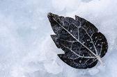 Dark frozen leaf — Stock Photo