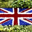 British flag flowers — Stock Photo
