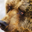 Sad Bear — Stock Photo