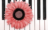 Piano Flower — Stock Photo