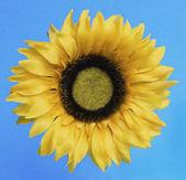 Flower Painting — Stock Photo