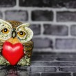 Owl in Love — Stock Photo