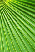 Abstract Palm Fan — Stock Photo