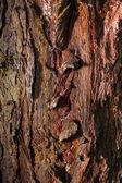 Old tree bark with resin streaks — Stock Photo