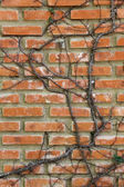 Brick wall with tree branches — Stock Photo