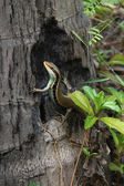 Ještěrka na stromě — Stock fotografie