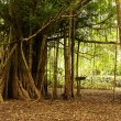 Stock Photo: Amazon jungle tree