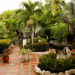 Garden view with trees, patio in summer resort (Tolu,Colombia) — Stock Photo